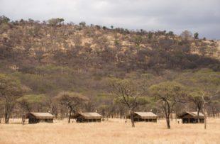serengeti-kati-kati-2013-6-800